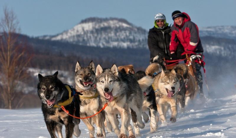 Ein Wintervergnügen der besonderen Art: Die Fahrt mit dem Hundeschlitten. (#1)