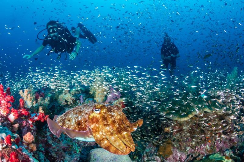 Die Artenvielfalt an Tieren und Pflanzen ist besonders im Koh Tachai Pinnacle unglaublich schön. (#04)
