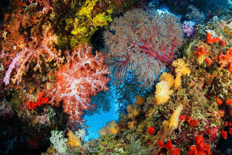 Eine Sprache zu lernen und nebenbei noch diese fanszinierende Unterwasserwelt zu genießen, was kann es schöneres geben. (#06)