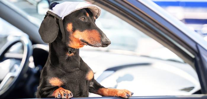 Hund Auto Urlaub Ferien