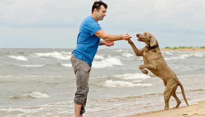 Die Strände an der Ostsee sind wie geschaffen für unsere Hunde. (Foto: shutterstock - Tatjana Baibakova)